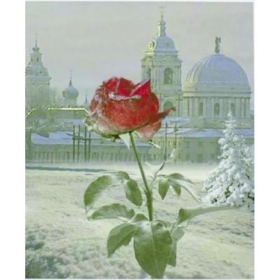 Картина по номерам 'Роза' 40*50см,крас.-акрил,кисть-3шт.(1*3 арт.:5447