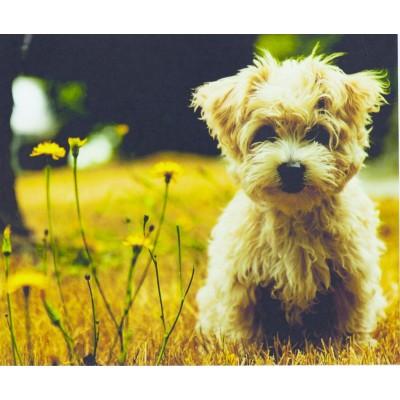 Картина по номерам 'Милый пёсик' 40*50см,990 арт.:990.