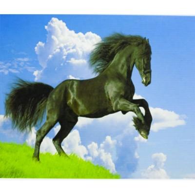 Картина по номерам 'Чёрный конь на дыбах ' 40*50см,крас.-акрил,кисть-3 арт.:5017